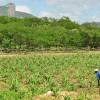 As orientações para adesão ao Garantia-Safra 2019/2020 foram divulgadas pelo Ministério da Agricultura, Pecuária e Abastecimento (Mapa) nesta quarta-feira, 24 de julho. AResolução 26/2019estabelece o […]